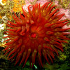 Monterey Memories : 6 days of diving with the Pacific REEF Advanced Assessment Team in and around Monterey, California during the last week of May, 2008