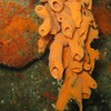 Marine Invertebrates of the Pacific Northwest (PNW) : Photographs of confirmed species, for comparison against new sightings